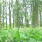 Bos bij Oortjeshekken, 30 x 40 cm prijs 295 euro